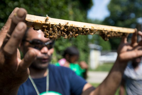 Brian Sales, deputy director for Groundwork Milwaukee, shows how bees start making honey combs to youths who volunteer at therapy gardens. Sales got the bees to show the importance of them in food production.