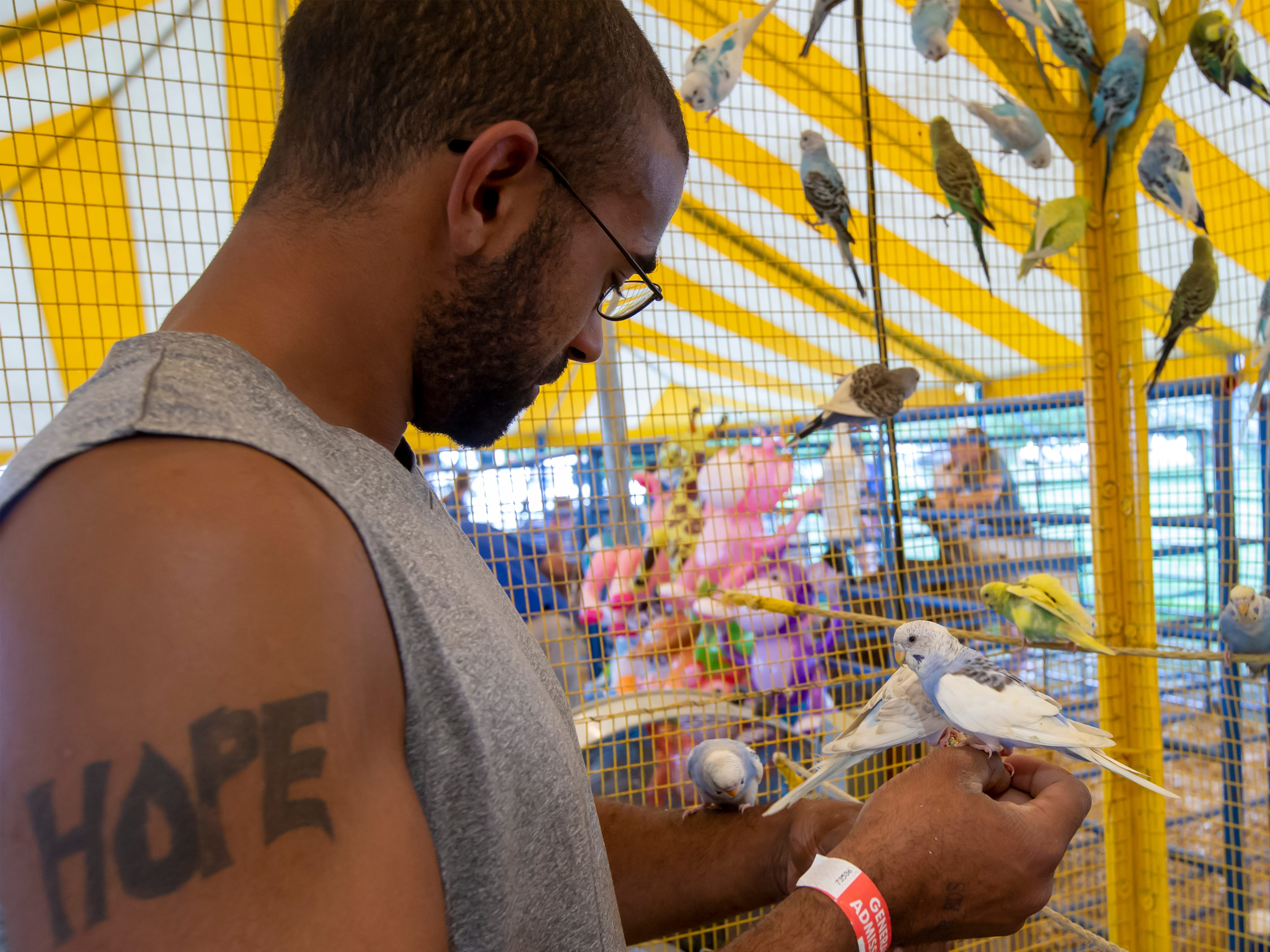 Mark Thurston's hands are covered with parakeets while visiting the petting zoo during the Winnebago County Fair on Saturday, Aug. 4, 2018.