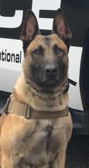 Leo, an Oxnard Police K9