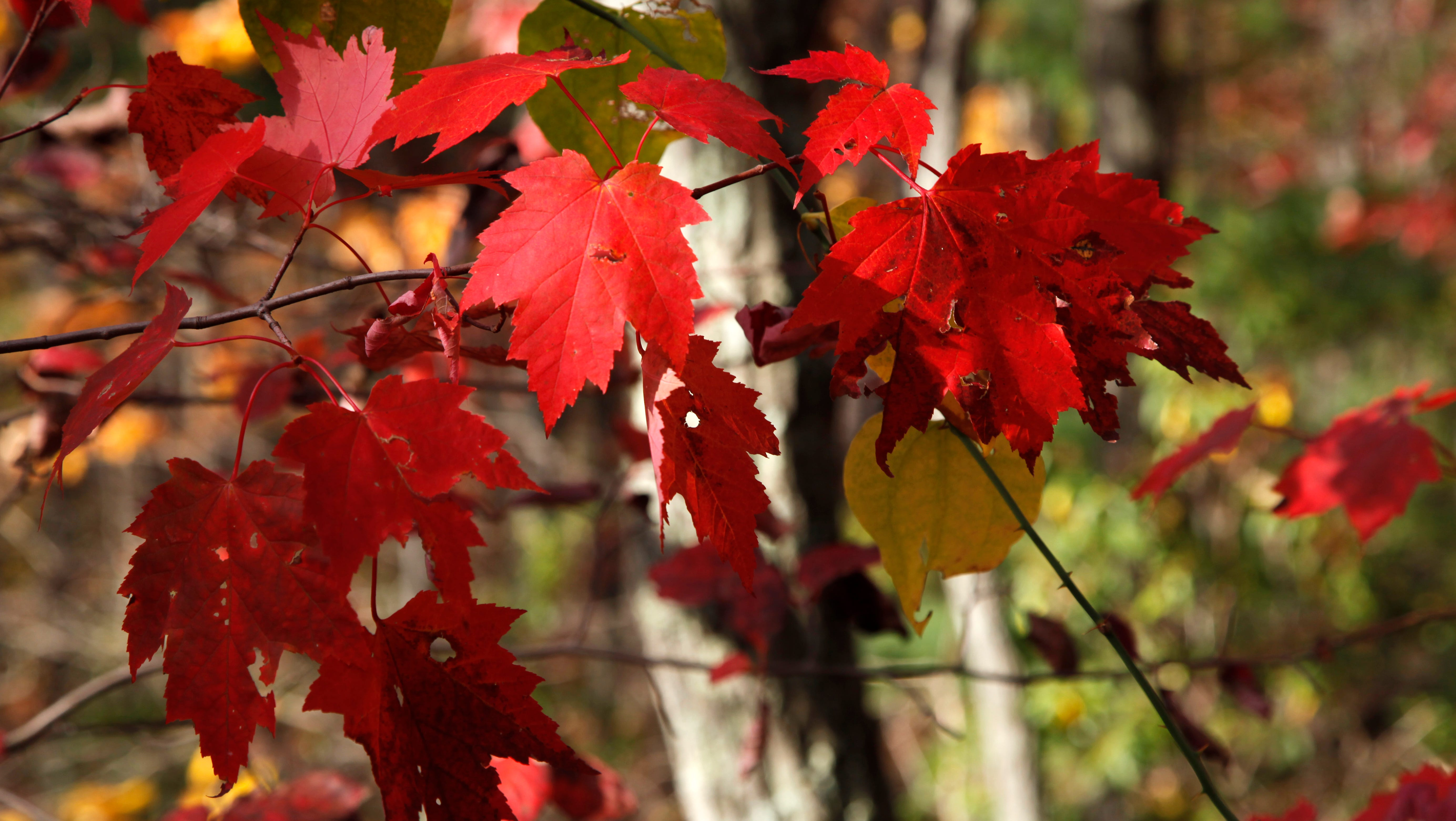 Dreaming of fall: Color vibrancy, duration will depend on weather