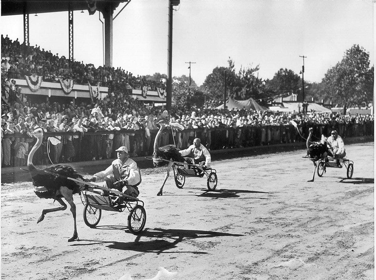 Ostrich races are part of the storied history of the Kentucky State Fair.-