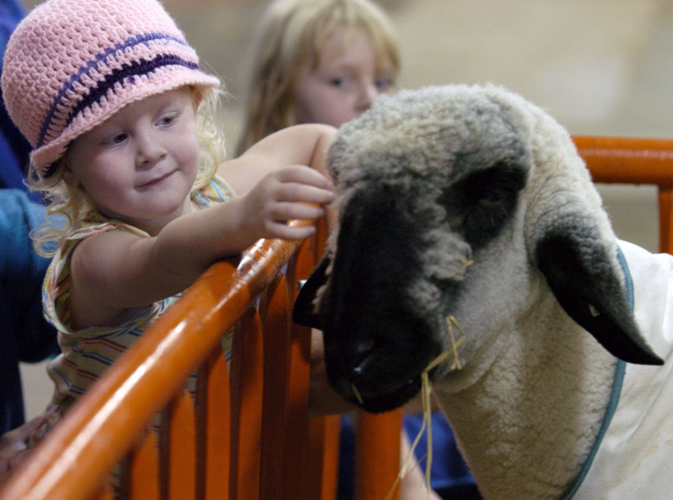 Sarah Jackson, 3 yrs. old, from New Albany, In., plays with a Suffolk sheep as her sister Wendy Jackson, 5 yrs. old, watches on the last day of the Kentucky State Fair in Louisville, Ky.