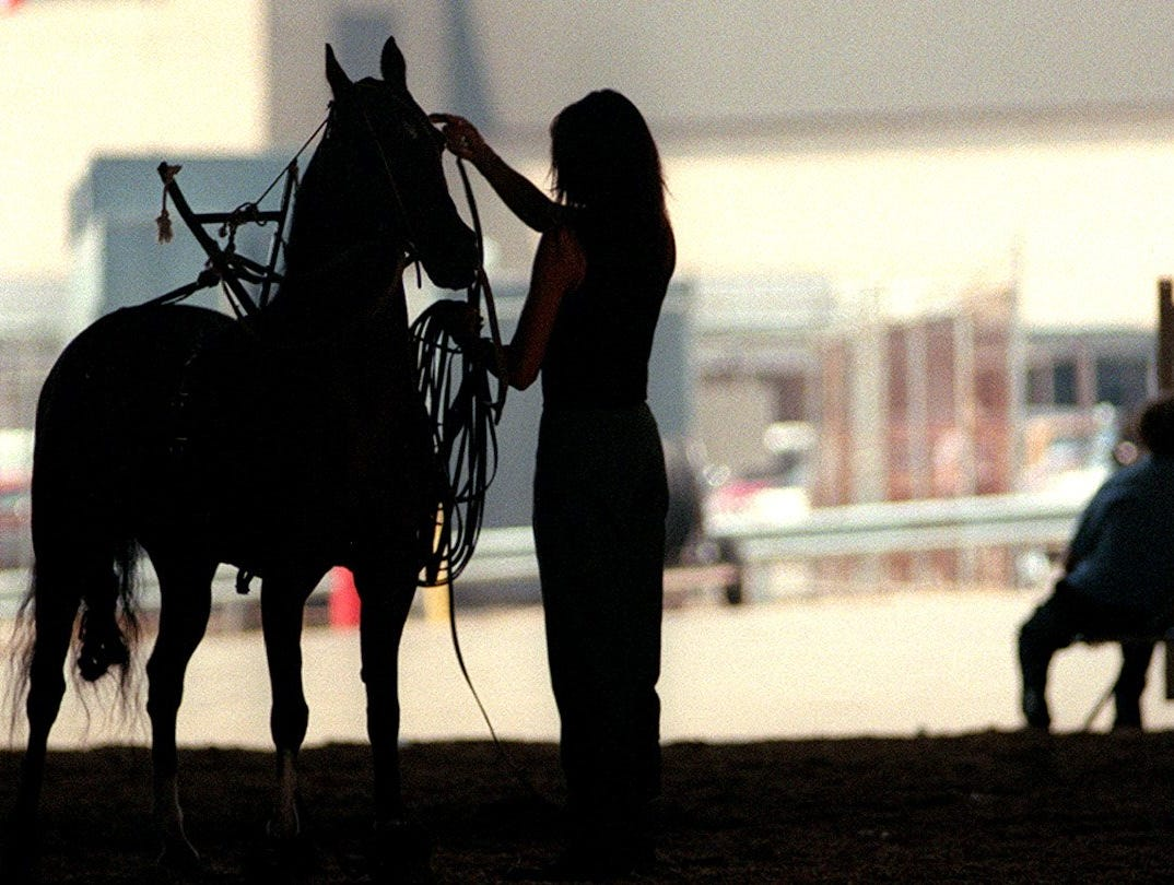 Trainer Ashley Wilson of Smithfield, Ky., let Downtown Brown rest a little after she exercised the horse outside Freedom Hall. Wilson said the horse will compete on Friday.-