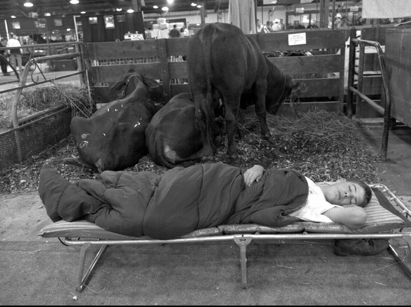 Ty Stogsdill of Bloomington, Indiana sleeps in front of his beef cattle at the Kentucky State Fair.  He arrived in the middle of the night with his cattle and just finally had time to catch some sleep.