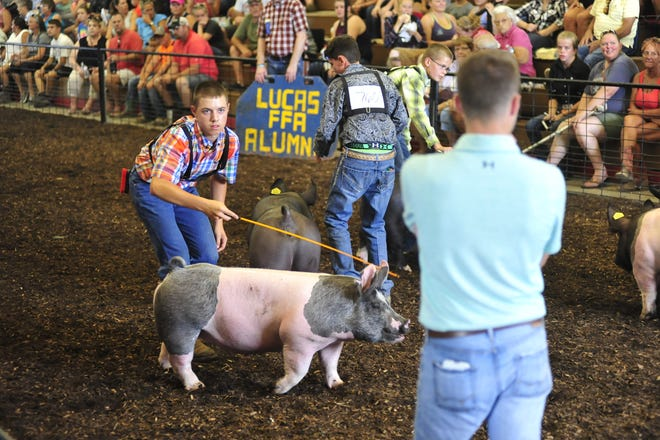 Colton Boyer, 15, of Lucas, walks his pig in front of showmanship judge Tim Wyszynski on Monday at the Richland County Fair.