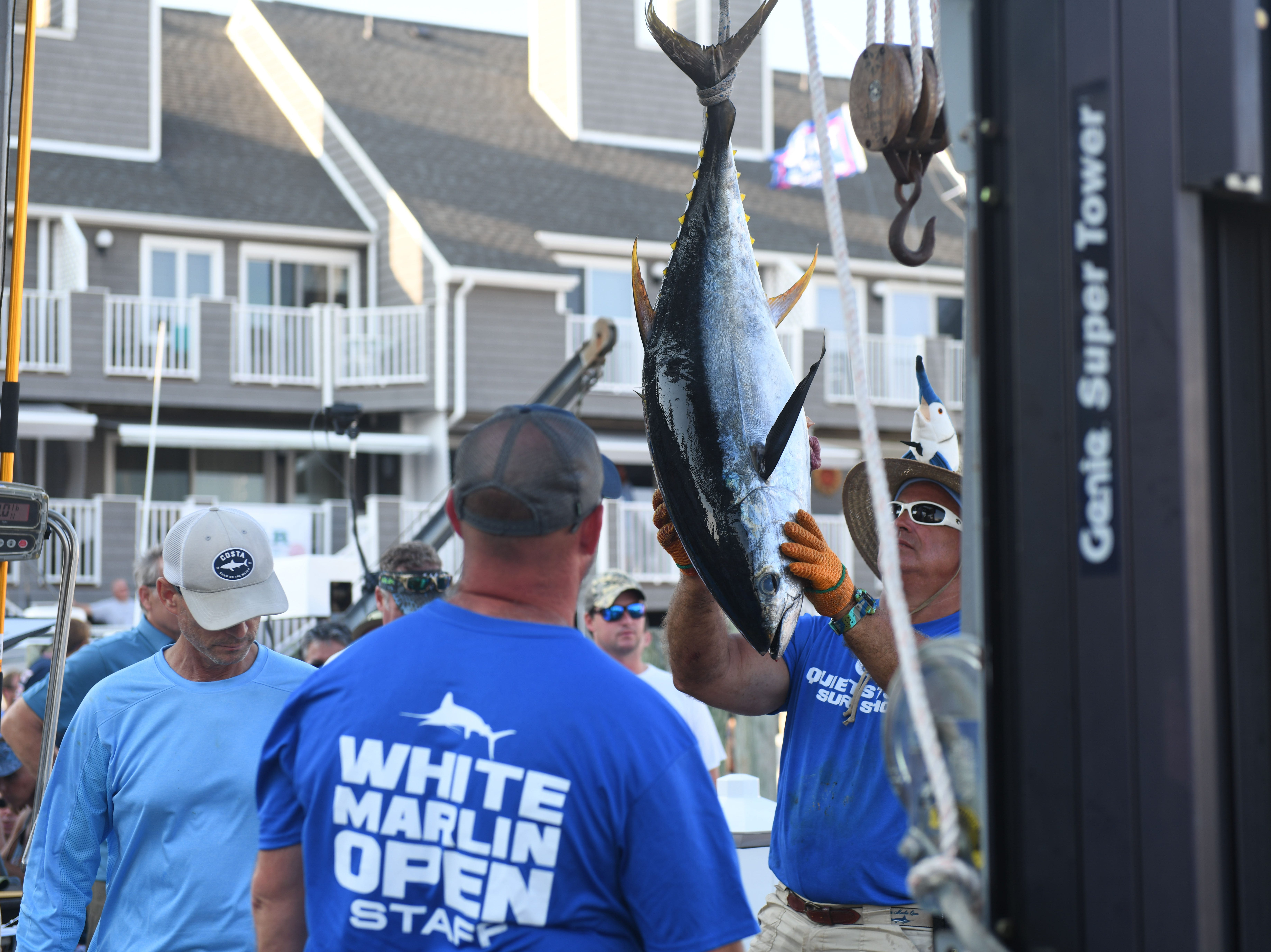 A 54.5lb tuna was brought in by Rhonda's Osprey on Monday, August 6, 2018 during the 45th Annual White Marlin Open in Ocean City, Md.