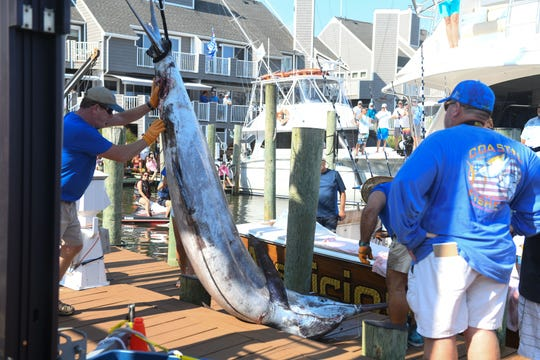 Harbour Island Marina dock hands assist in getting a 881-pound blue marlin off of the Auspicious on Monday, August 6, 2018 during the 45th Annual White Marlin Open in Ocean City, Md.