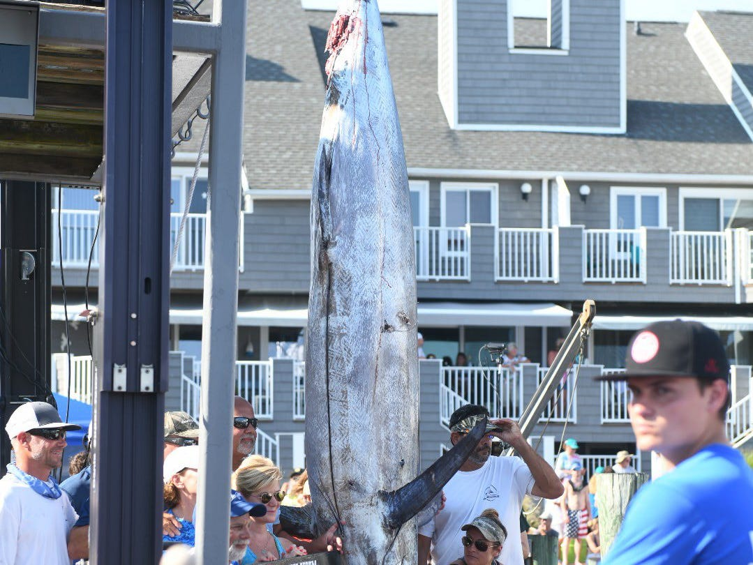 A 881-pound blue marlin was caught Monday, Aug. 6, 2018. It's the the sixth-largest in tournament history.