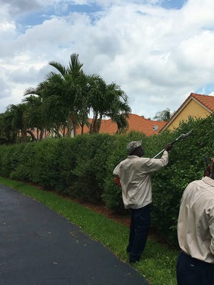 A well-qualified landscape maintenance company can produce a beautiful Florida yard.