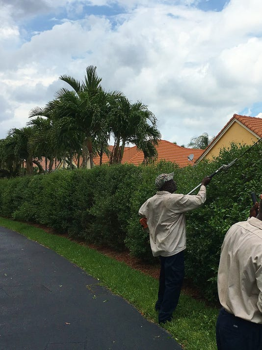 Hedge Trimming Aug 19