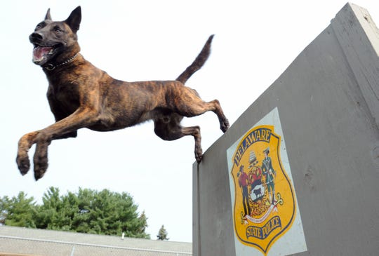 Delaware State Police K-9 Ripper was assaulted by a fugitive but not injured. His assailant was treated at Kent General Hospital for puncture wounds of the leg. Funds are being raised to train law enforcement agencies across the state for incidents where dogs are injured in the field.