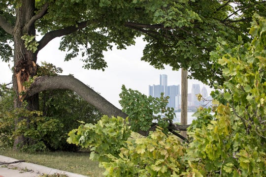 A damaged tree frames a view of downtown Detroit on Belle Isle in Detroit on Tuesday, August 7, 2018.
