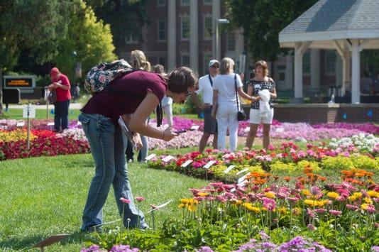 Ftc807 Flowergardens