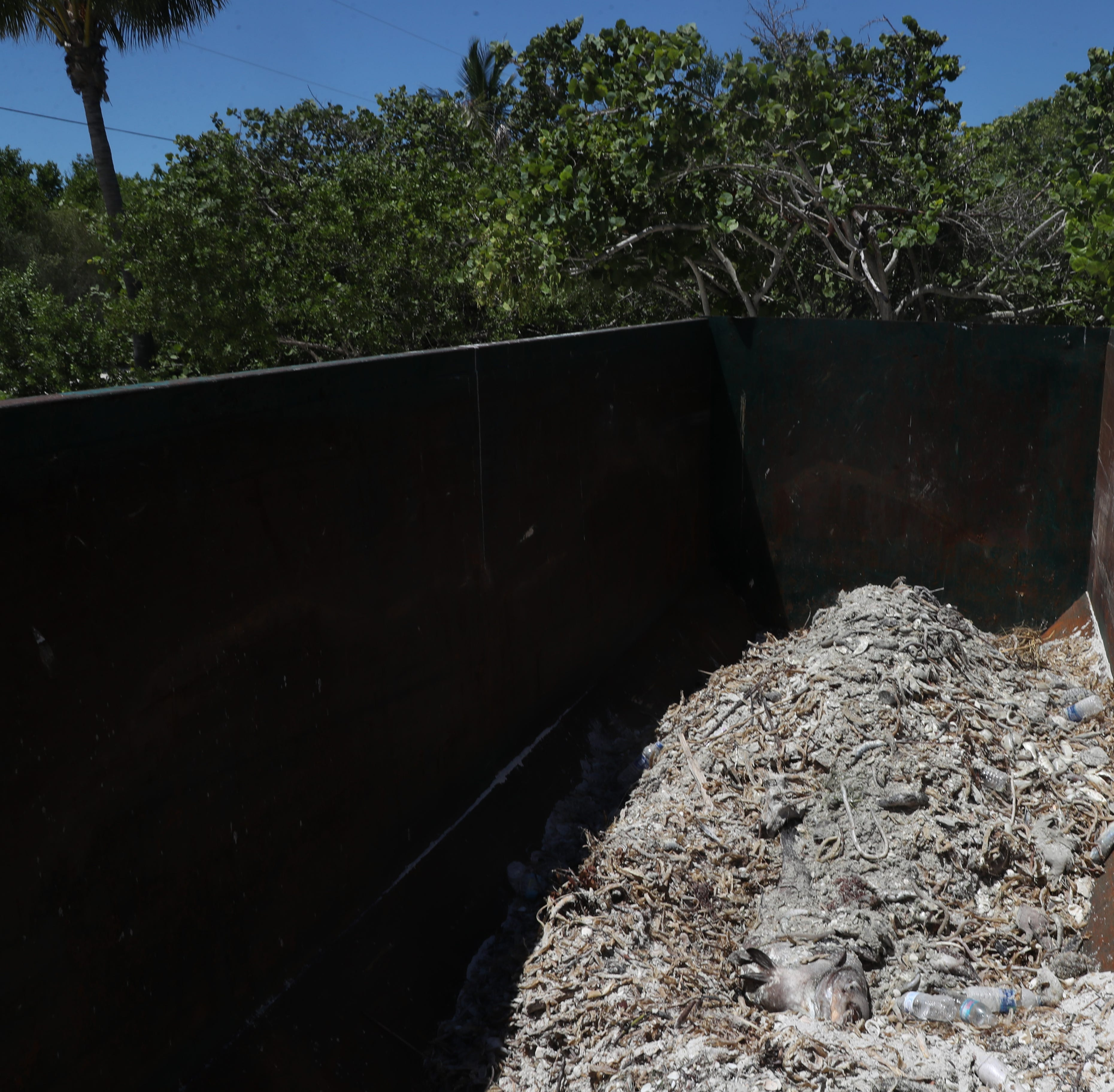 More than 2.7 million pounds of dead fish removed from Florida beaches, so far