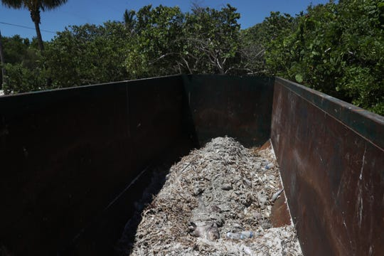 Dead marine life can be seen in a dumpster at the Sanibel Pier on Tuesday, Aug. 7, 2018. The tourism and fishing industry are seeing the effects of a red tide outbreak that has ravaged Southwest Florida.