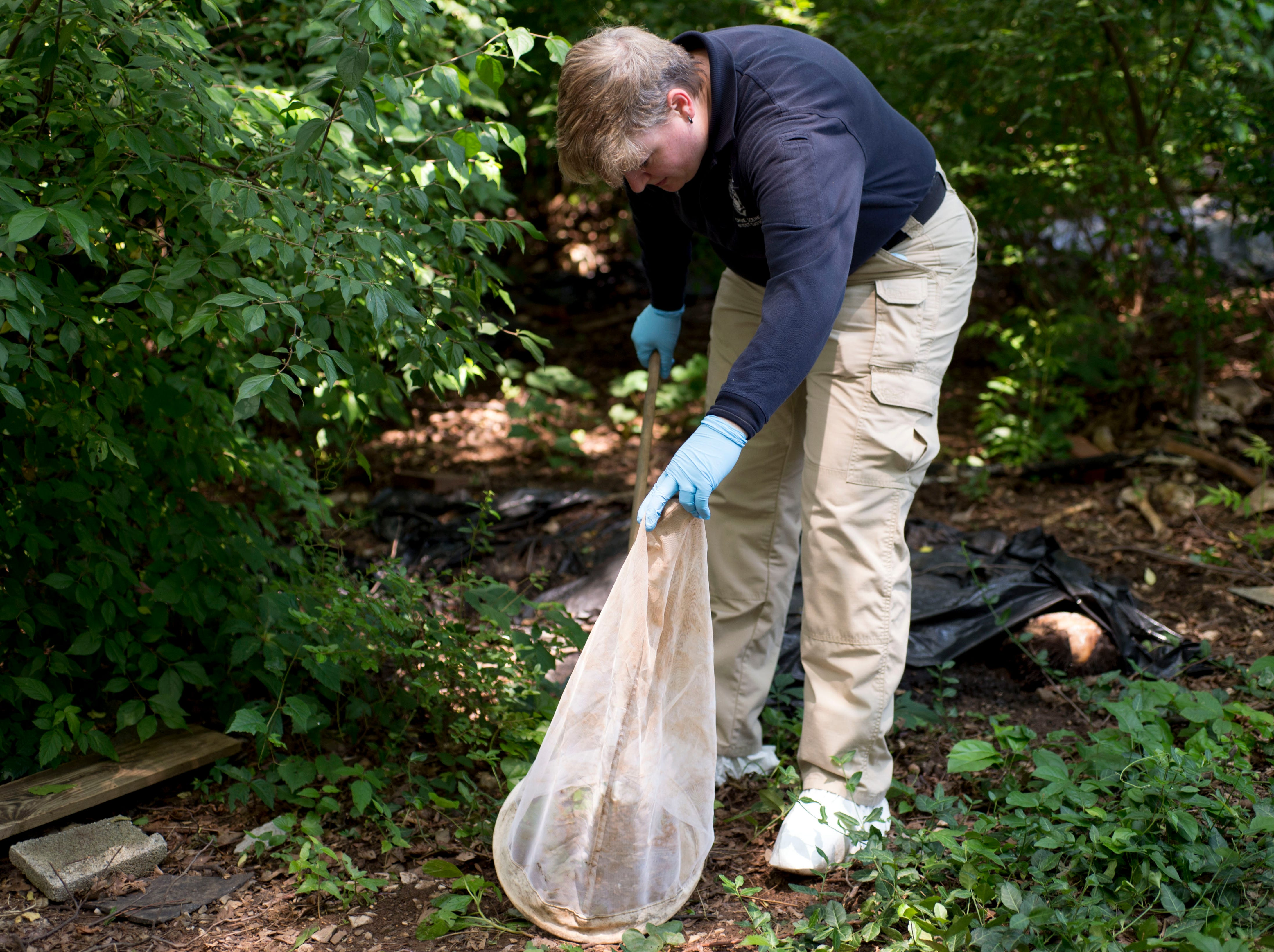Bonnie Queen of North Carolina's Charlotte-Mecklenburg County Police Department tries to capture flies found near cadavers on Wednesday, June 10, 2015 during a weeklong forensics training course at the University of Tennessee's Forensic Anthropology Center.