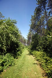 Trails at Hoffman Hills Recreation Area northeast of Menomonie are grassy and well maintained. They're popular with cross-country skiers in the winter.
