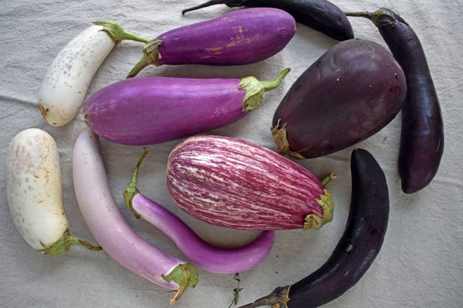 Eggplants come in a variety of sizes, shapes and colors.