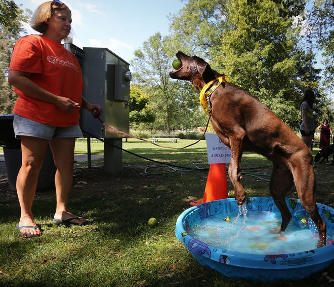 Two and a half year old Nevada leaps up to catch a ball tosses by Diana Werner, of Colgate, Wis., as he plays in a children's pool at a past Pet Fair in Menomonee Falls.