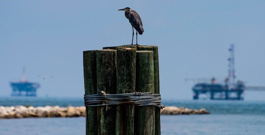 Wildlife and oil platforms at Dauphin Island, Ala., on Tuesday July 26, 2018.
