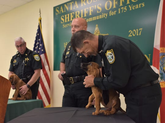 Santa Rosa County deputy Robert Lenzo tries to get the agency's newest recruit, a bloodhound puppy, to sit during a press conference Aug. 7, 2018.