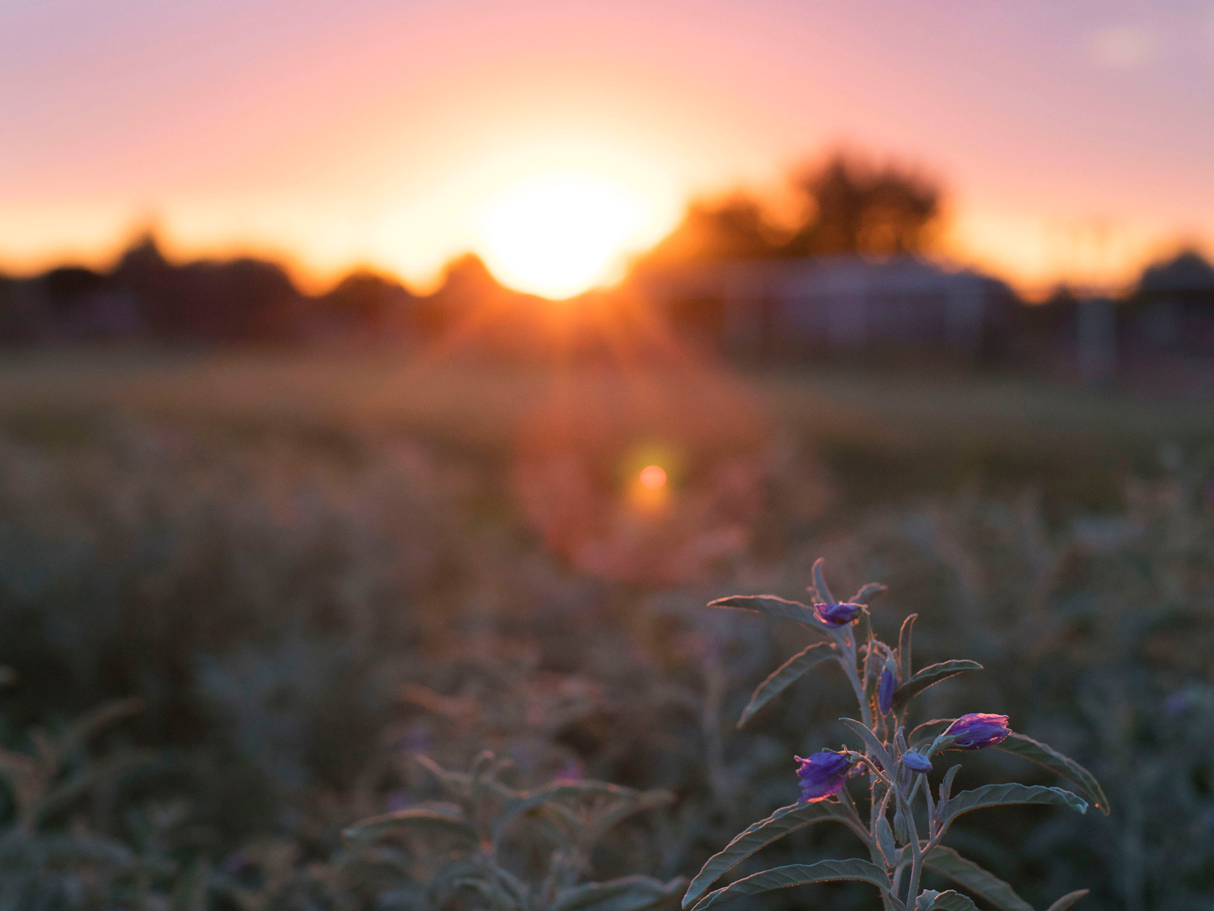 "The sun setting over the meadow as seen from the pergola. ""At a certain time of day,"" Ryan Sutton said, ""the meadow just has that magic."""