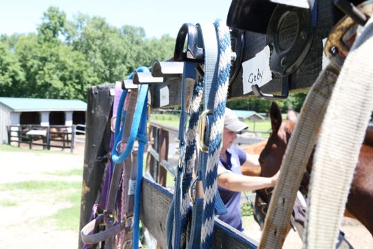 Deanna Mancuso, executive director of Lucky Orphans Horse Rescue puts a bridle on one of the horses on their farm in Millbrook on July 19, 2018.
