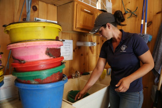 Deanna Mancuso, executive director of Lucky Orphans Horse Rescue prepares meals for one of the 51 horses on their farm in Millbrook on July 19, 2018. Each horse has a different diet, and Mancuso along with her staff have to make sure each meal is made correctly.