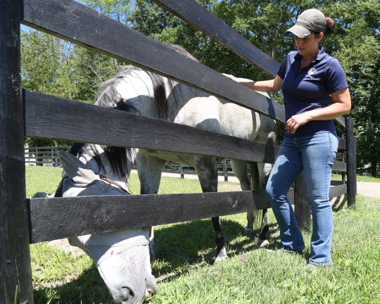 Deanna Mancuso, executive director of Lucky Orphans Horse Rescue checks in on one of the 51 horses on her farm in Millbrook on July 19, 2018.