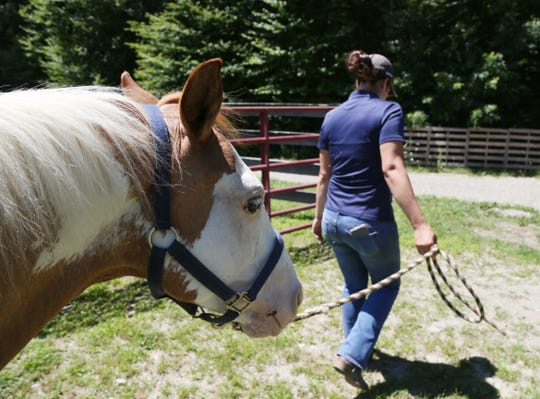 Deanna Mancuso, executive director of Lucky Orphans Horse Rescue leads Patches, one of the 51 horses at the rescue's farm to a pasture on July 19, 2018.
