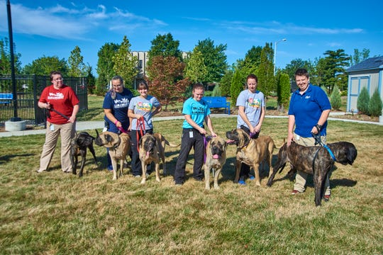 The dogs are continuing their recovery, which may take several additional weeks. They will be made available for adoption as soon as each one is healthy. This photo was taken on July 25.