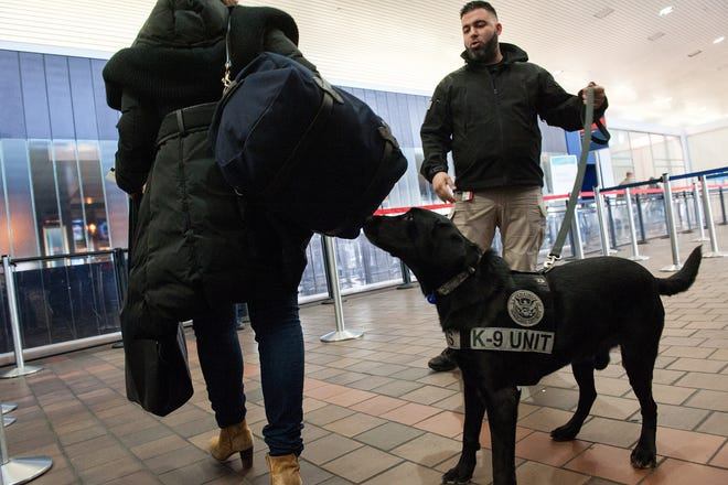 Transportation Security Administration K9 handler Tommy Karathomas and his explosive-detection dog Buddy perform a demonstration at LaGuardia Airport on January 20, 2016 in New York City.