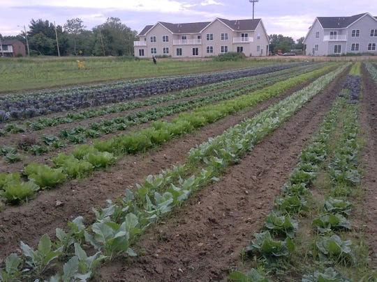 A view of the vegetables  growing at Stone Road Meadows.