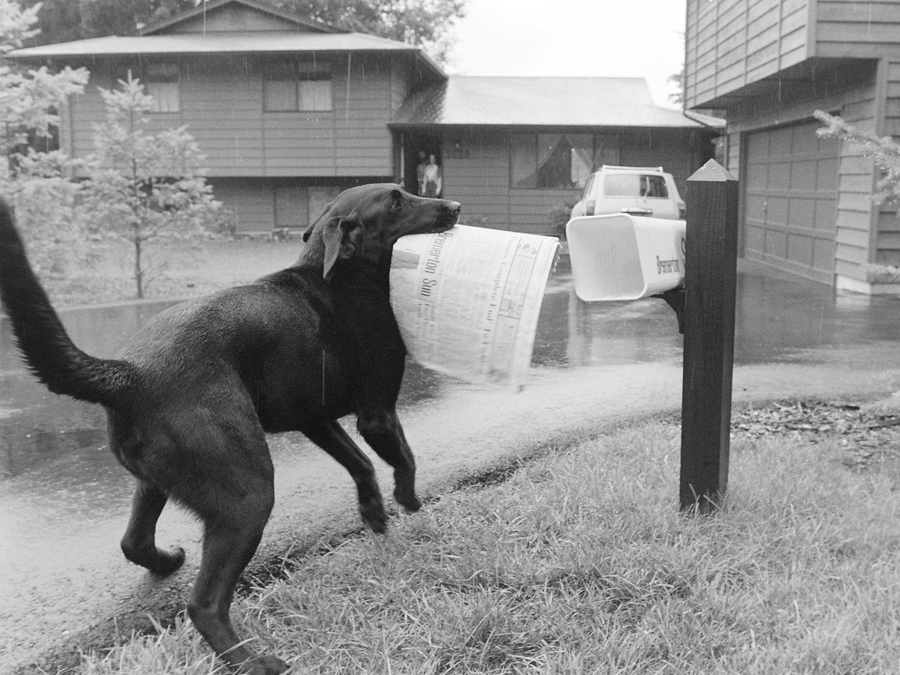 08/10/82Dog Gets Paper