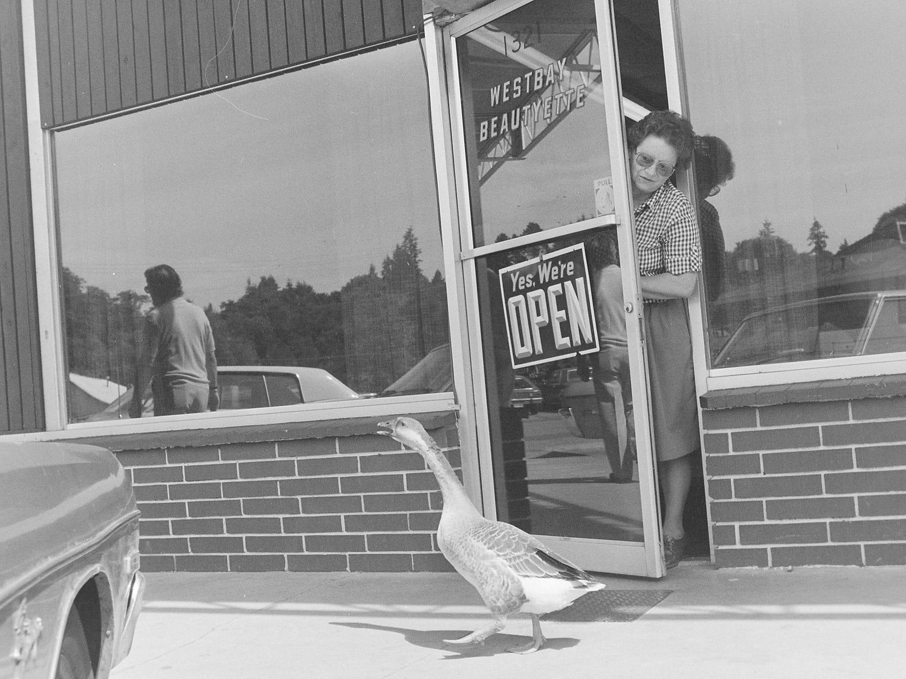 07/07/82Loose Goose