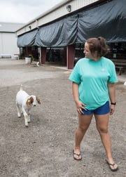 """Grace Day's Market Goat Grand Champion Brennan follows her around the fair fairgrounds Wednesday afternoon. """"I train my goats that way,"""" said Day. """"I have rarely needed a lead for my goats"""""""