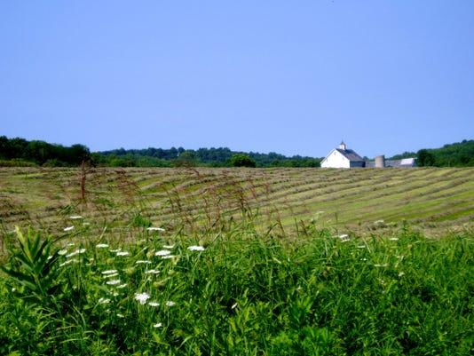 Craigmar Farm Hay Fields