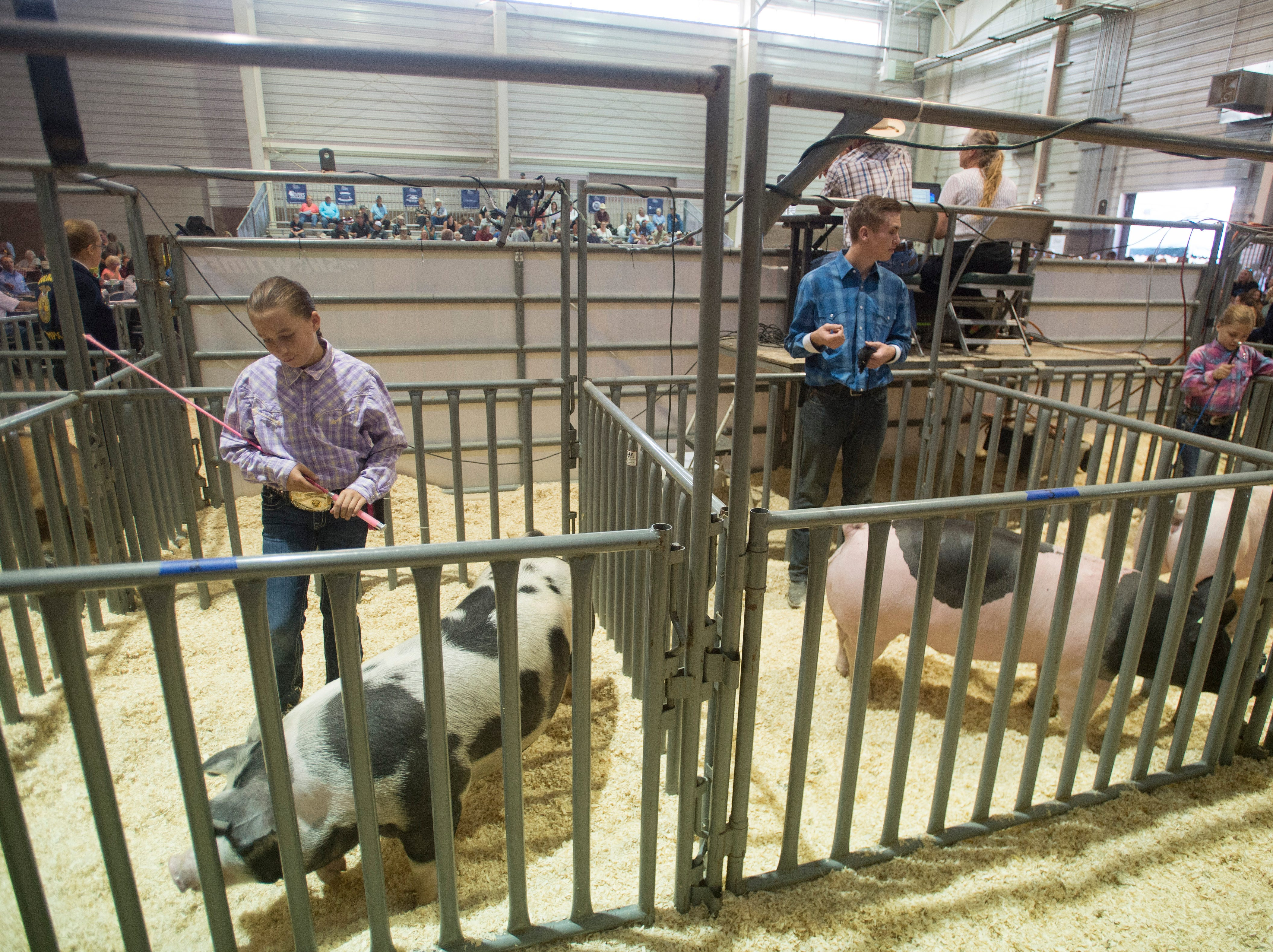 Pigs are held in pens before bidding takes place at the Larimer County Fair Youth Livestock Sale at The Ranch in Loveland on Wednesday, August 8, 2018.
