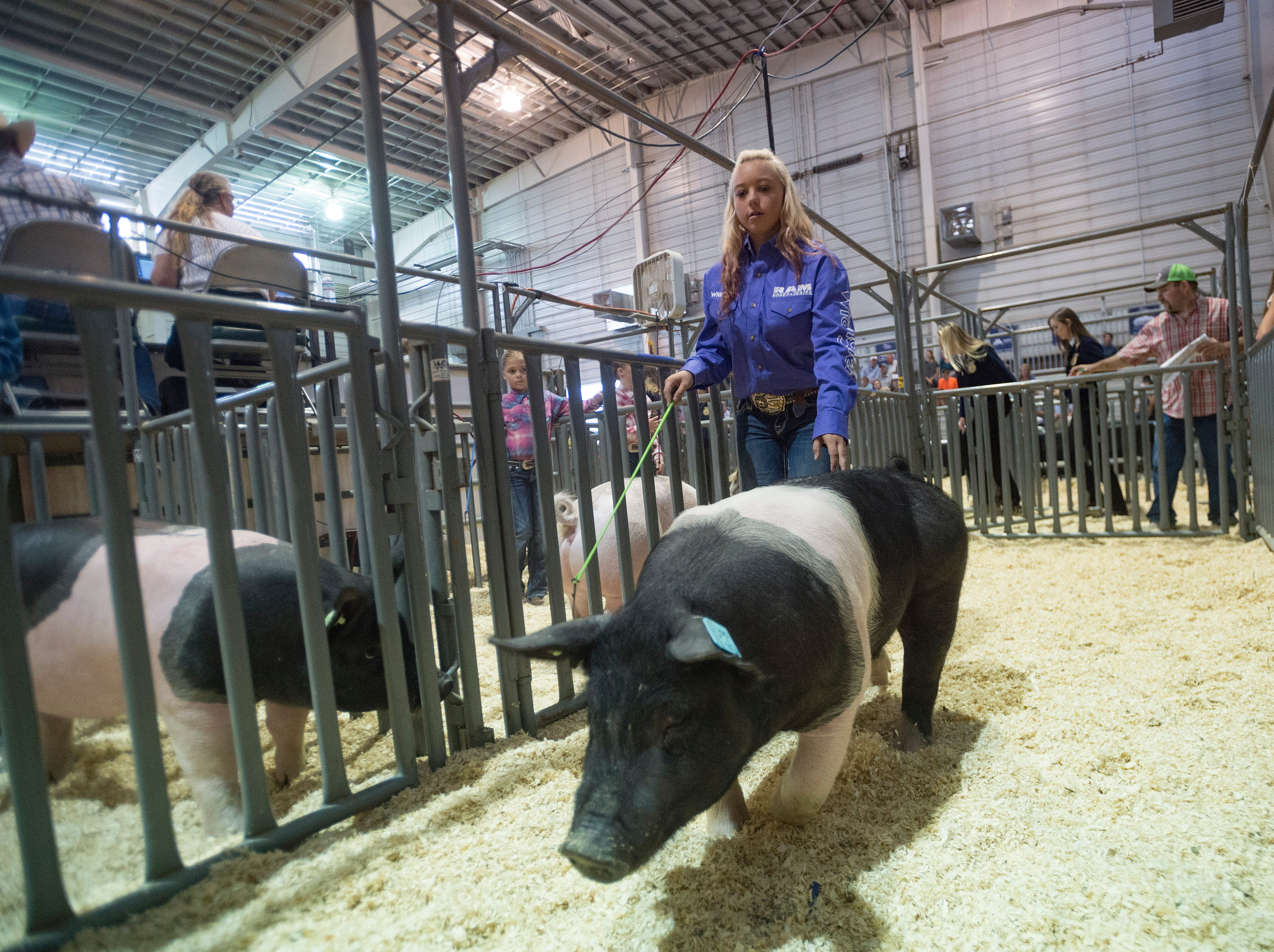 Satin Wilcox coaxes her pig into the sales arena at the Larimer County Fair Youth Livestock Sale at The Ranch in Loveland on Wednesday, August 8, 2018.