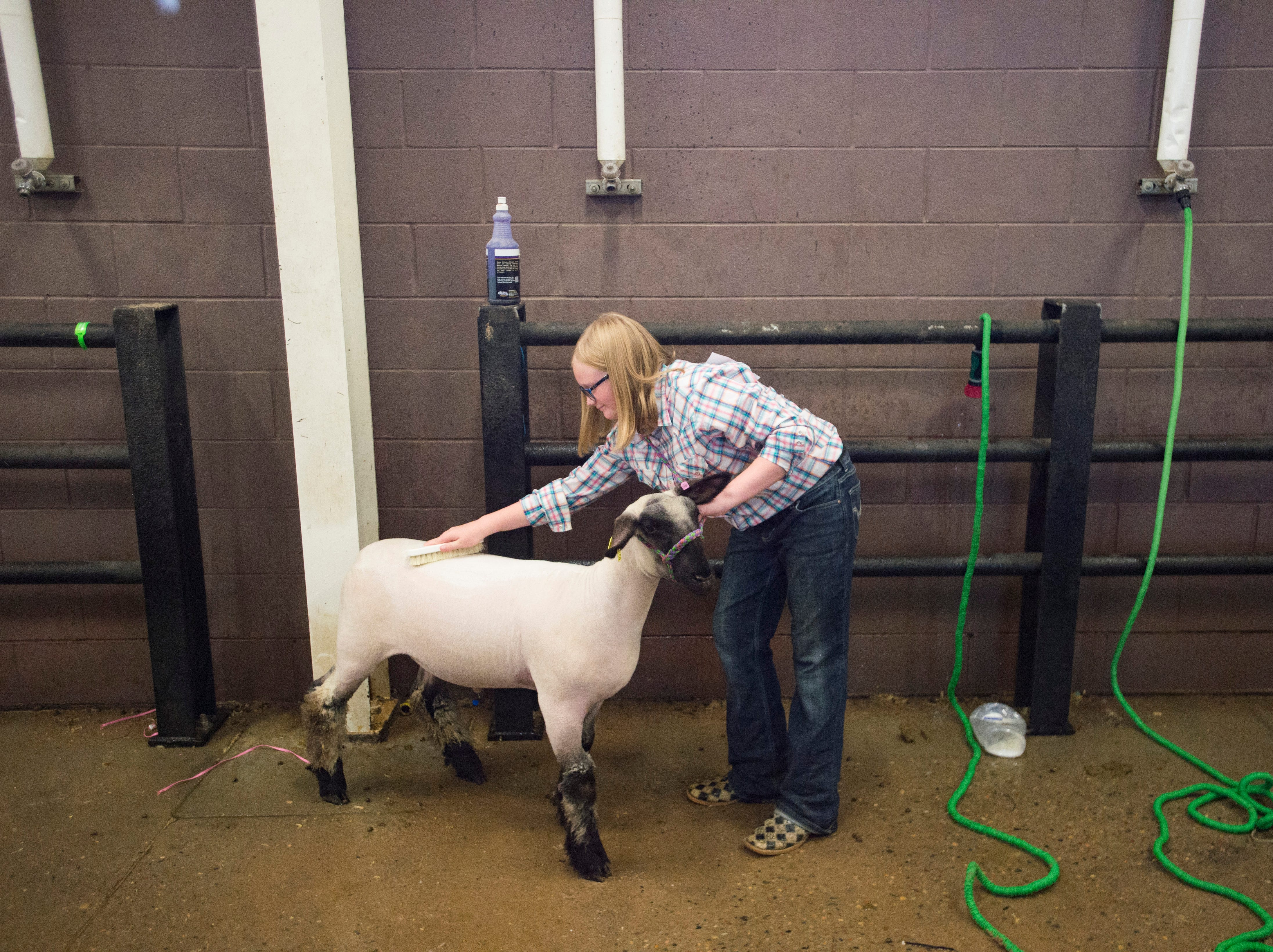 Audrianna Hardley gives her lamb a bath before it is sold at the Larimer County Fair Youth Livestock Sale at The Ranch in Loveland on Wednesday, August 8, 2018.