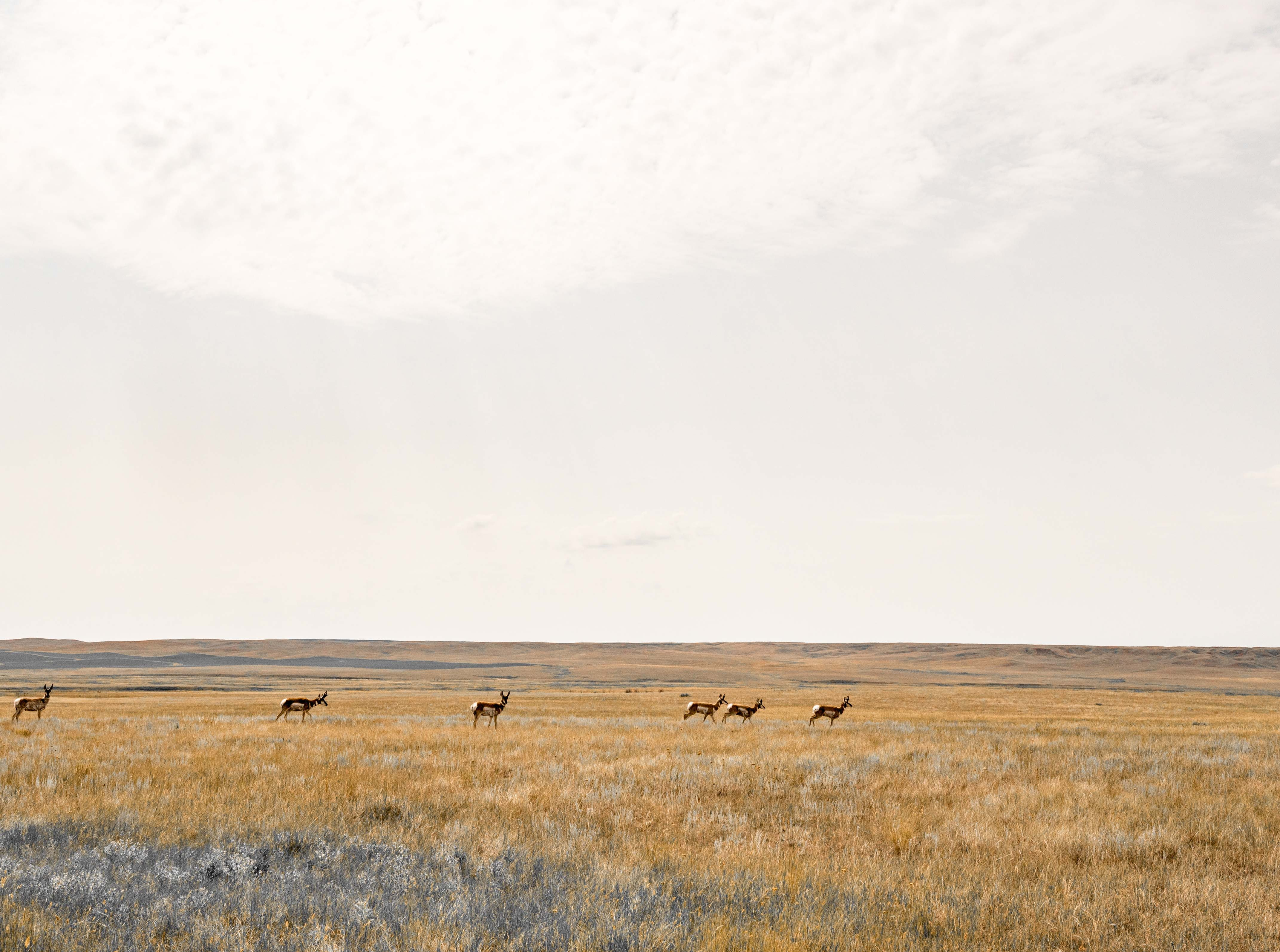 Montana's middle of nowhere is where the antelope roam.