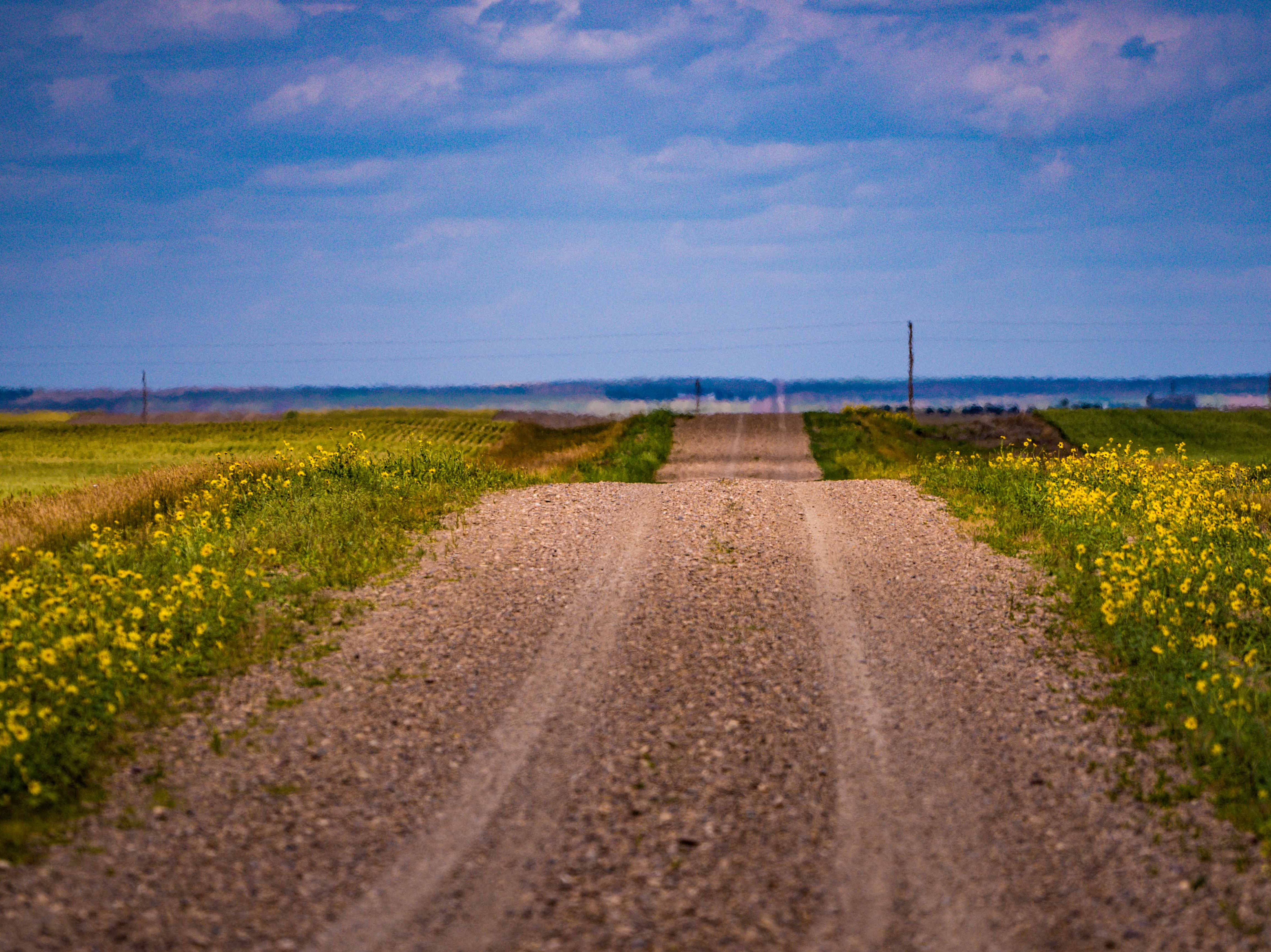 Flowers bloom along a road through the middle of nowhere, the most isolated area in the contiguous United States.