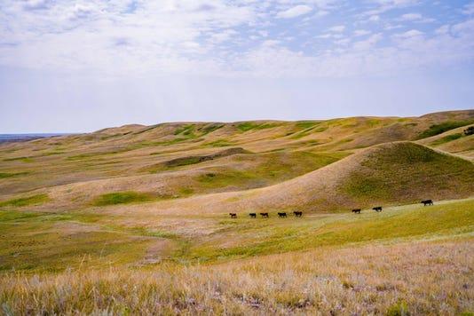 Montana outdoors 1