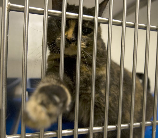 The Hendricks County Animal Shelter in Danville is in dire need of food donations for cats and kittens.