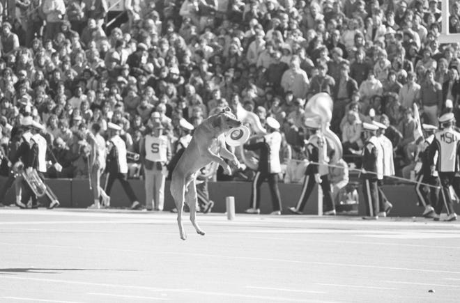 The original Zeke the Wonderdog wowed Spartan fans at MSU football games in the late 1970s and early 1980s.