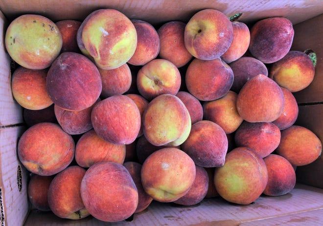 Fresh Georgia peaches from The Peach Truck.