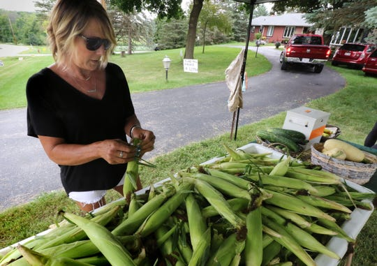 Cheryl Swan checks a few of the ears of sweet corn picked that morning from the Swan Farm's seven acres that should produce for the next six weeks. Swan Farm at W239 N4050 Swan Road in Pewaukee offers fresh corn picked daily and sold by the honor system from a table on a front yard turnaround driveway.