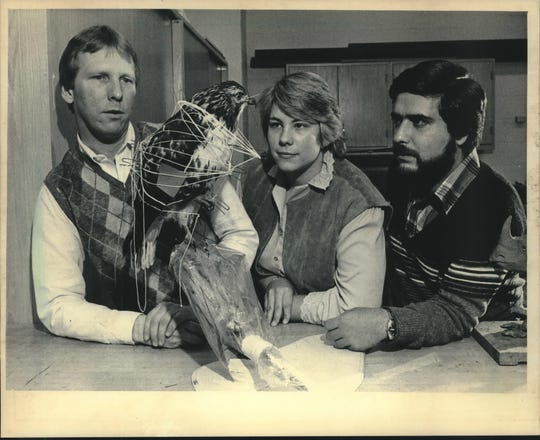 1986: A red tail hawk was admired by Milwaukee Public Museum taxidermists Greg Septon (left) and Wendy Christensen-Senk, and Daniel Hernandez of the National Museum of Costa Rica. Hernandez was helping the Milwaukee taxidermists obtain animals in Costa Rica.