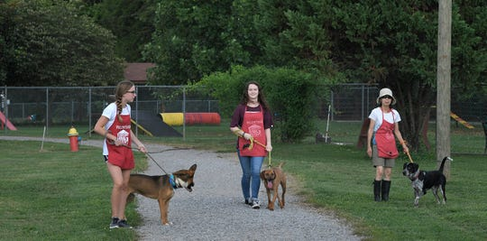 Volunteers walk dogs at the Williamson County Animal Center on Wednesday, August 8, 2018.