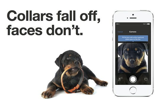 When using Finding Rover, pet owners can submit a photo for a lost, found or adoptable pet.